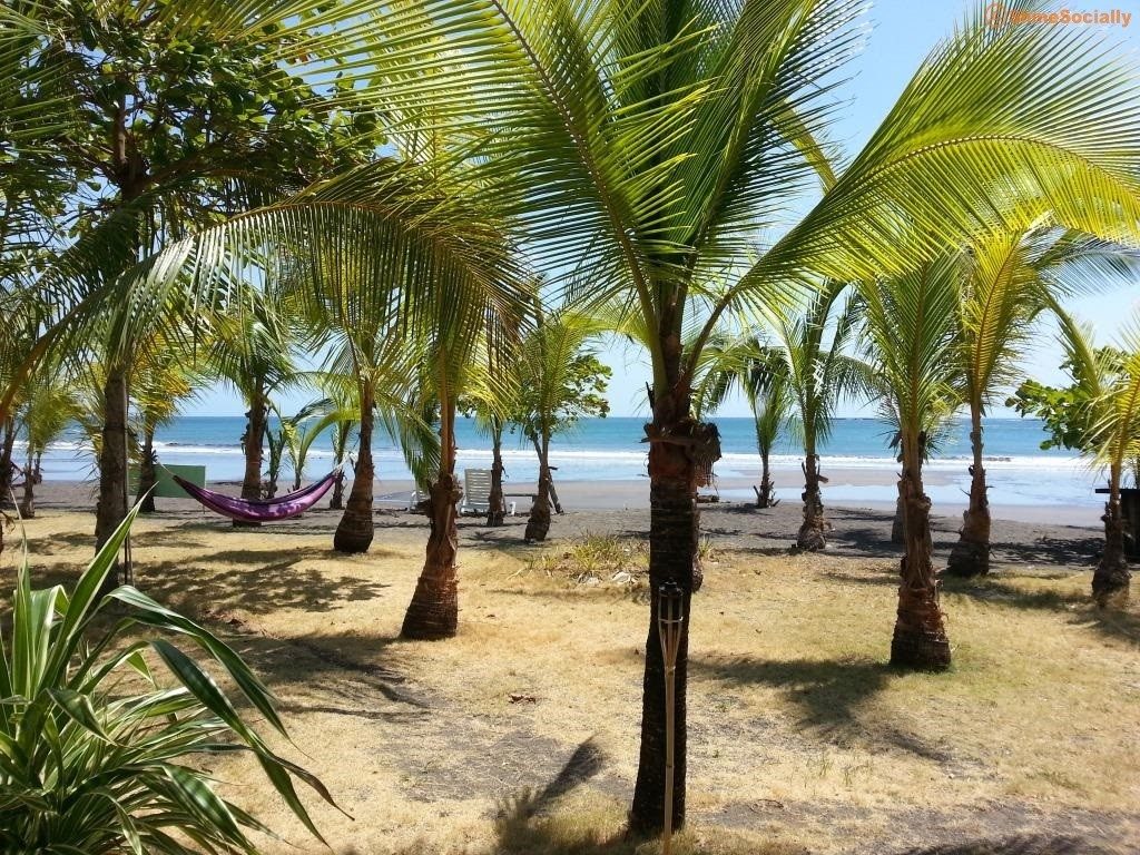 Picture of plams at Playa Cambutal, Panama
